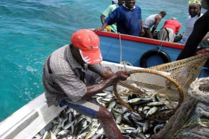 Fishermen project annual 51% loss in profit due to poaching