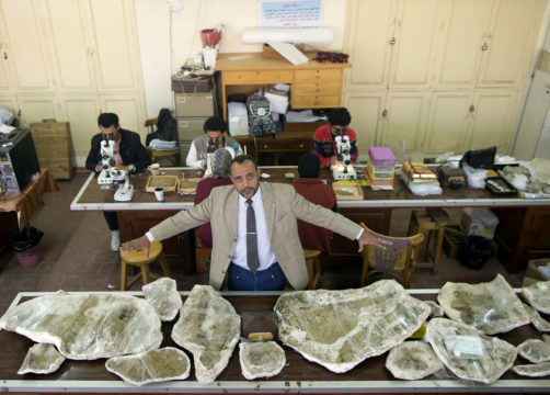 Rare dinosaur discovery in Egypt could signal more finds