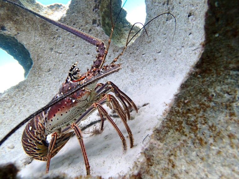 REPORT: $24M worth of Lobster in protected areas