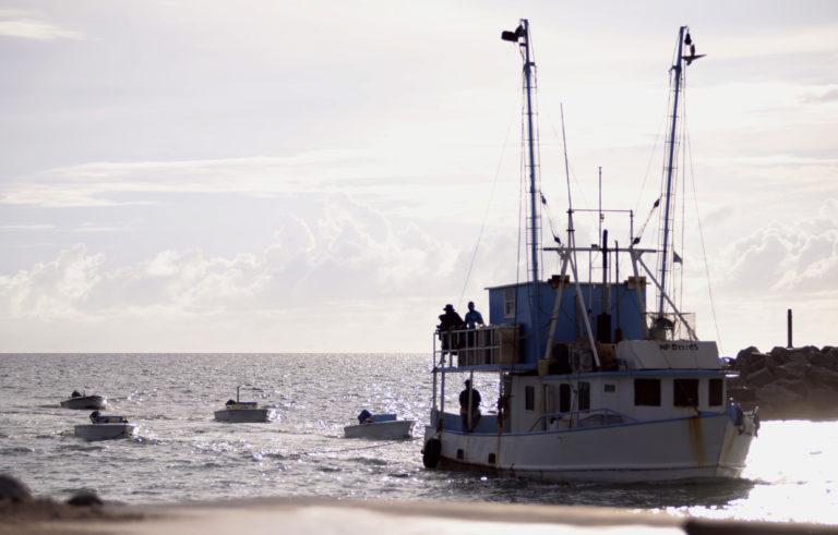 Dominican poachers arrested