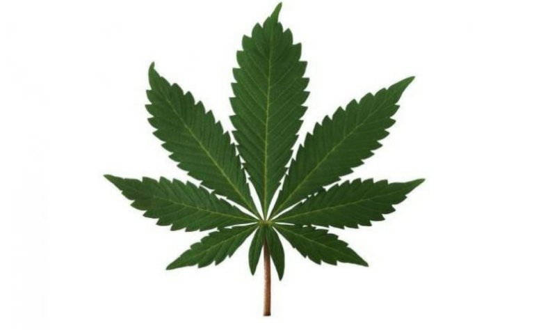 Weed commission says legalise marijuana