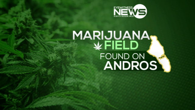 Another weed field found in North Andros