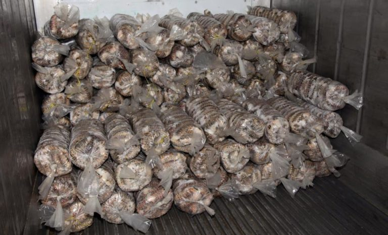 Fishers braced for 'low yield' year