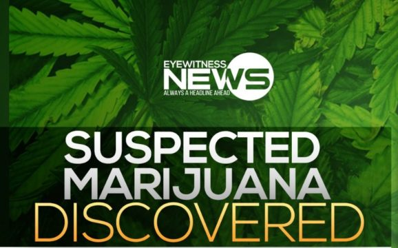 $137K worth of suspected marijuana uncovered by police