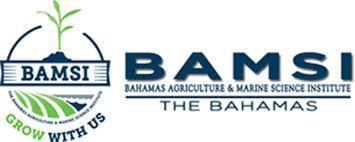Despite claims made on social media, no fire at BAMSI