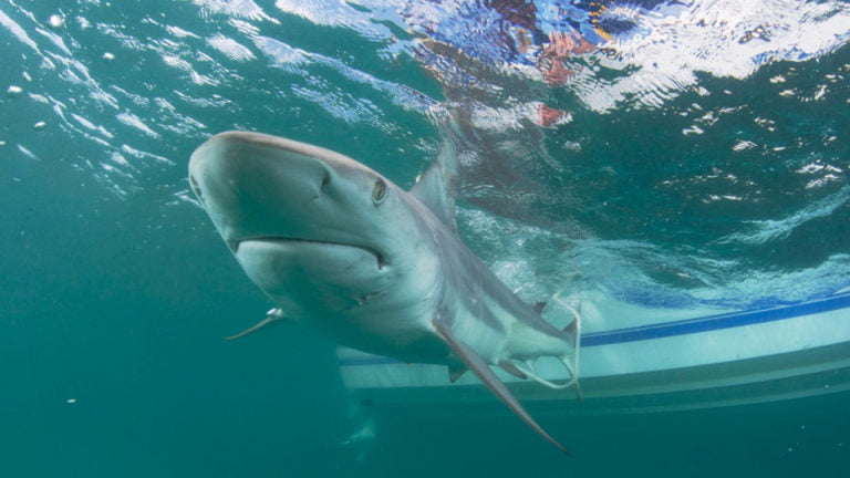 Public advised to exercise extreme caution after deadly shark attack