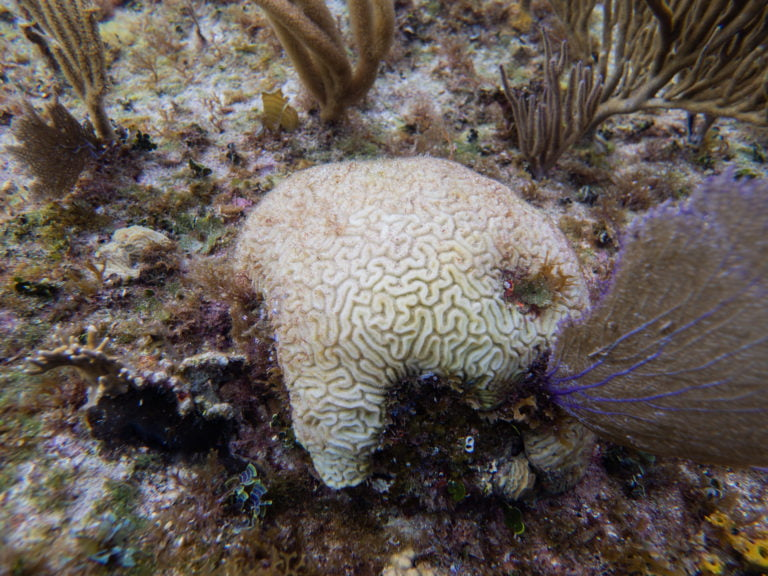 SILENT KILLER SPREADS: Scientists warn deadly coral disease plaguing Bahamian waters