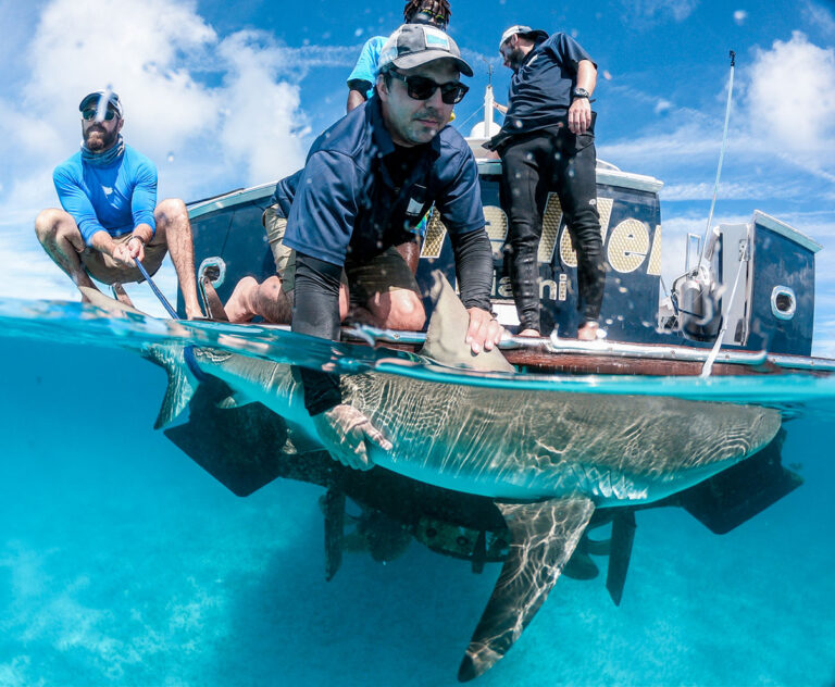 """Bahamas researcher Dr Austin Gallagher named scuba diving magazine's """"Sea Hero"""" for work with sharks"""